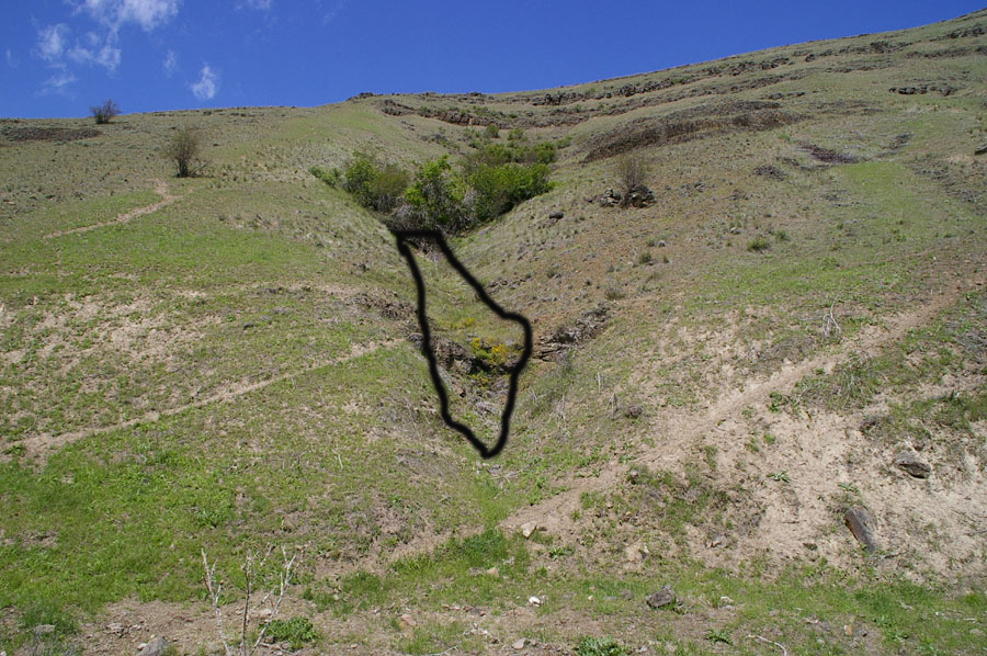 Seep habitat in which above photo of Mimulus patulus was taken, Smoothing Iron - Asotin Wildlife Area © Dr. Don Johnson