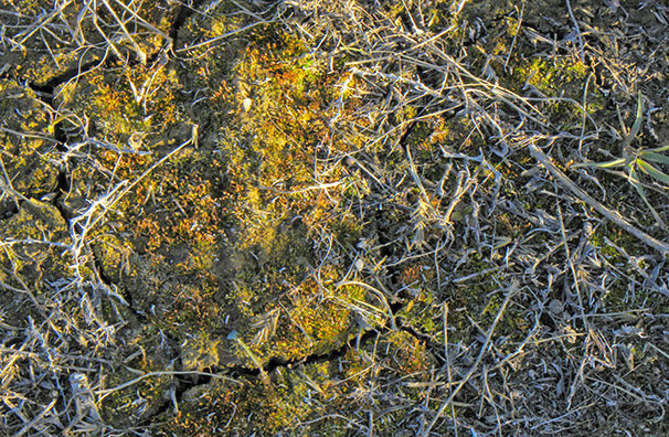 Microbiotic crust. Great Basin
