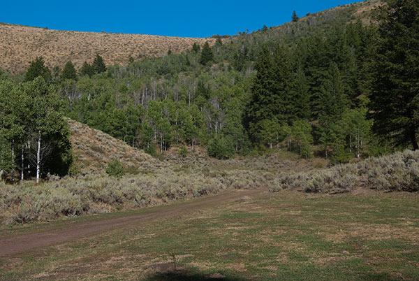 Wood-canyon4-grazed