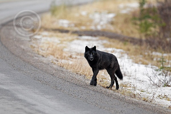 WDNR Public Attitudes Towards Wolves Survey