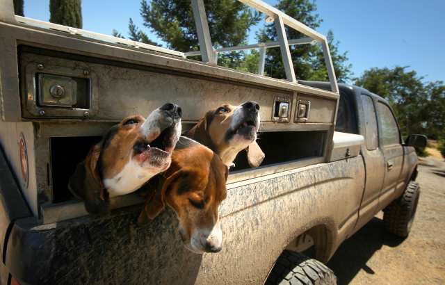 Six hound hunting dogs were killed by wolves defending the pups in east Idaho.