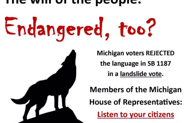 Urgent action alert: Michigan wolves need you now…