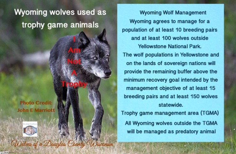 Please Take Action to stop Wyoming wolves from being used as trophy game animals