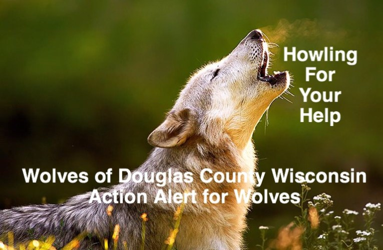 Urgent action needed for wolves: Persuade Your Senators to Oppose S. 1514…