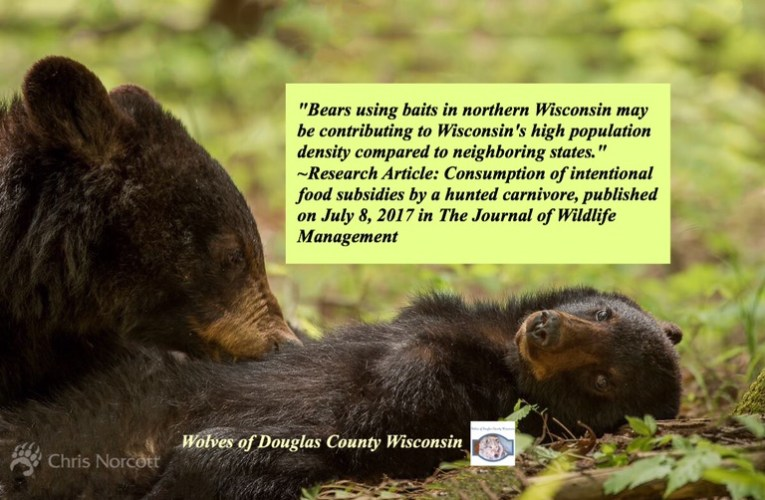 Human food subsidies make up more than 40% of the diet of bears in northern Wisconsin.