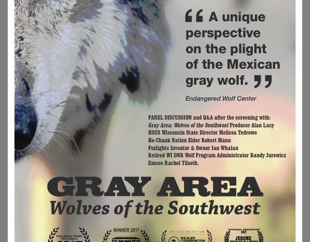 "In celebration of Wisconsin Wolf Awareness Week: A Wisconsin Premiere of ""Gray Area: Wolves of the Southwest"" screens in Madison"