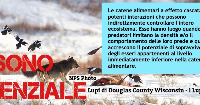 Wolves of Douglas County Wisconsin is published in Italian now…