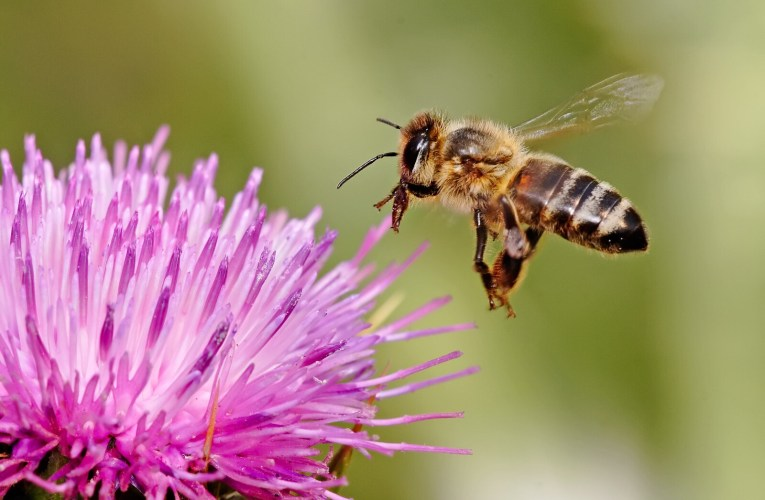 Ecosystem Services: Think of bees that pollinate more than 90 commercial crops in the U.S….