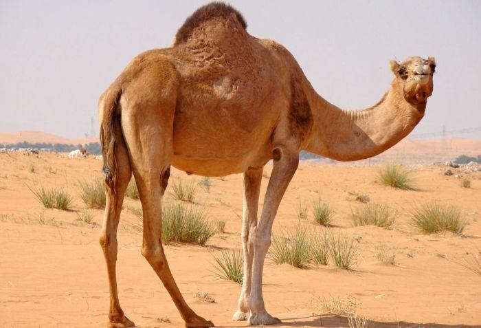 pierderea în greutate a deșertului kalahari