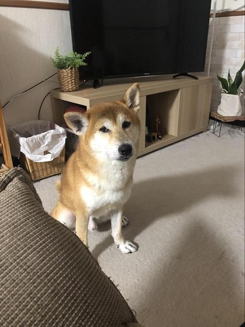 山崎あおいと犬