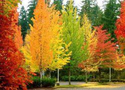 Народные приметы осени. Народные приметы на осень. Осенние пословицы и поговорки Осенние приметы для детей 6 7 лет