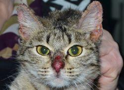 Препарат Преднизолон для кошек: в каких случаях назначается и что следует учесть. Преднизолон для кота – правила безопасного применения