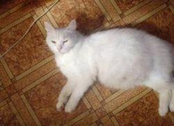 Сколько кошки ходят беременные Сроки и этапы вынашивания котят