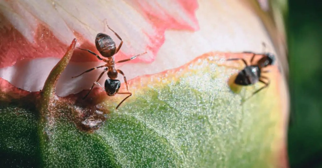 Bible Verses About Ants