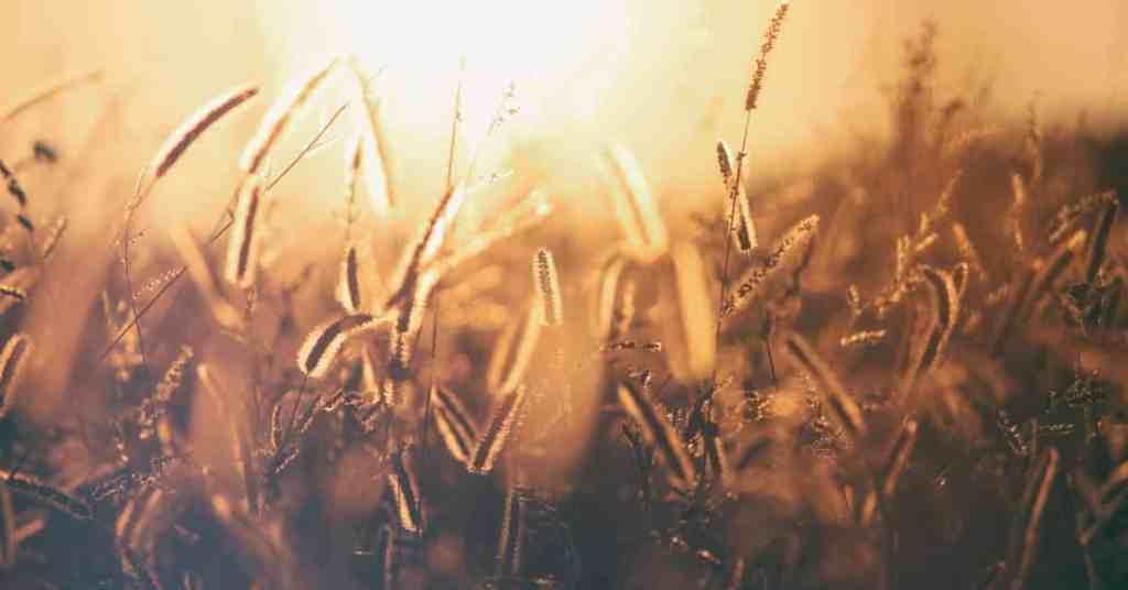 the harvest bible verses