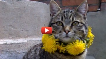 кот спас котенка