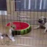котенок напугал двух щенков