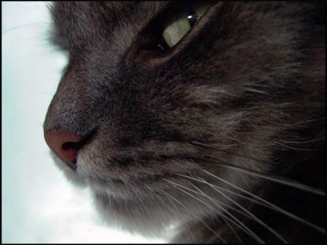 оборзевший кот