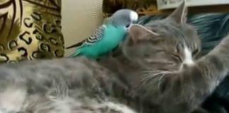 Говорил попугай