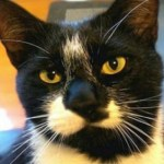 Ворующий трусы кот