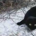 Снег выпал? Да ладно! Черный котейка удивлен
