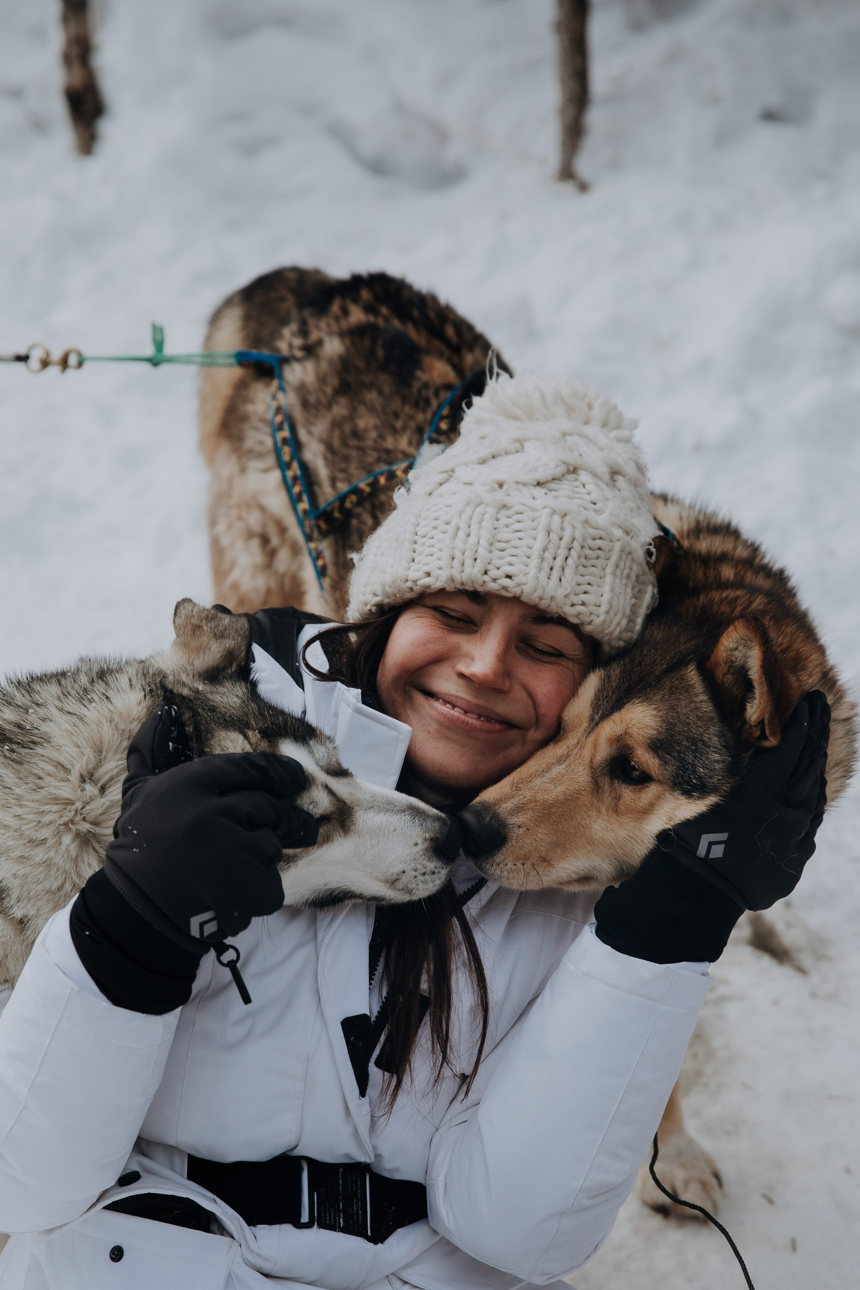 The Ultimate Banff Winter Guide - dog sledding with Snowy Owl Dog Sled Tours