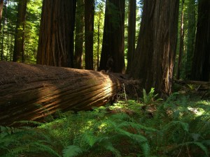 tree in forest - source theuniverseandthetime blogspot