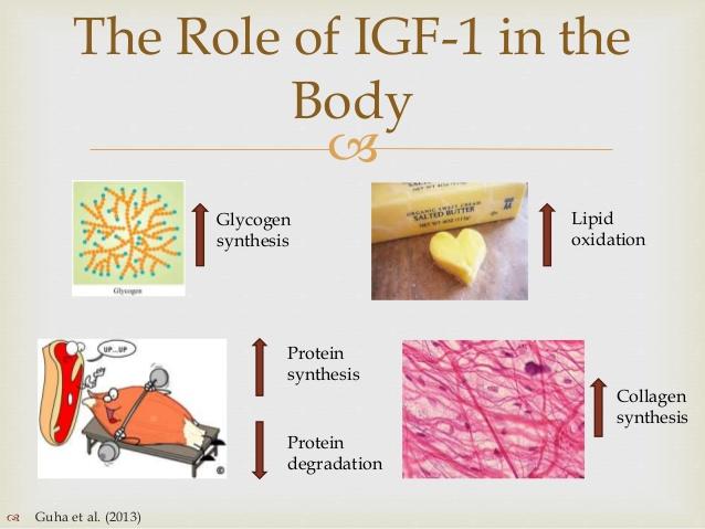 What is IGF-1
