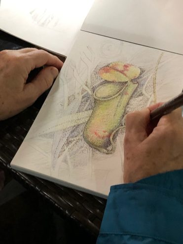 Drawing pitcher plants during a NatureArt Lab field trip to Borneo, photography Julia Landford