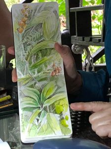 Nature journaling in Borneo with NatureArt Lab, Photography Julia Landford