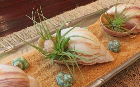 Раковины и кораллы в декоре интерьера