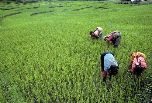 Women farmers worldwide need restrictions raised to 'level the food field'