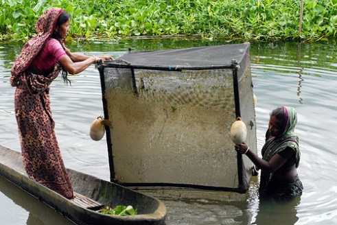 Bangladeshi women with fisth traps