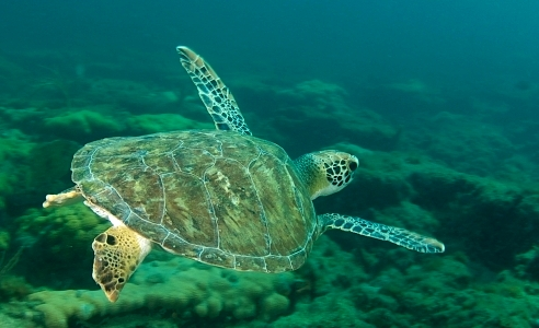 Biodiversity of marine life is essential to saving species