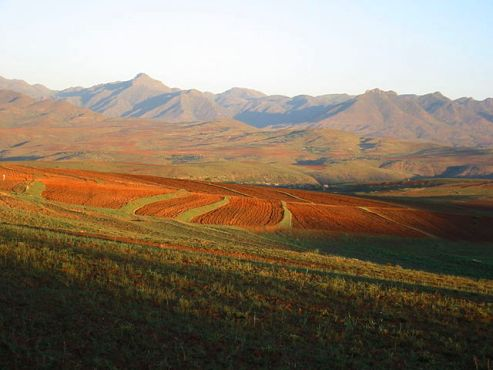 Community gardens work to increase food security in Lesotho, Africa