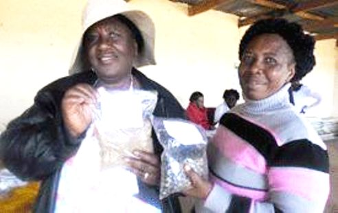 Tonota women pioneer coffee farming in Botswana