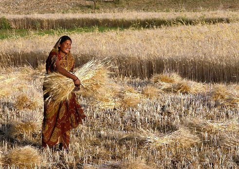 All rural women in India must have full access to mobile technology