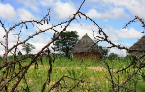 Food availability in Africa depends on climate dependability