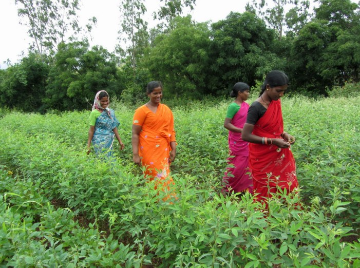 India's Dalit women empowered by collective farming