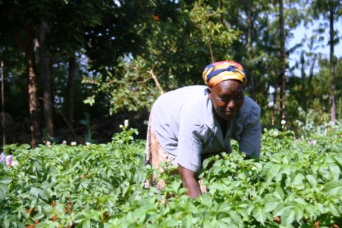 Technology helps Africa's women farmers close the gap