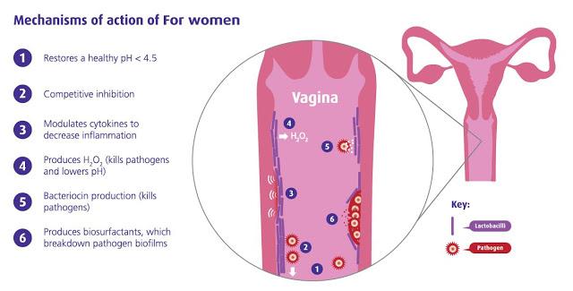 fw-vagina-diagram-1