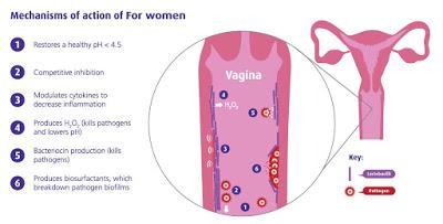 fw-vagina-diagram