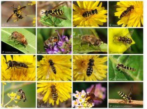 beneficial-bugs