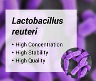 lactobacillus-reuteri-lr-1