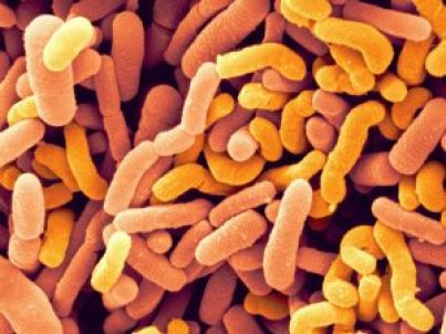 9-bifidobacterium-bifidum