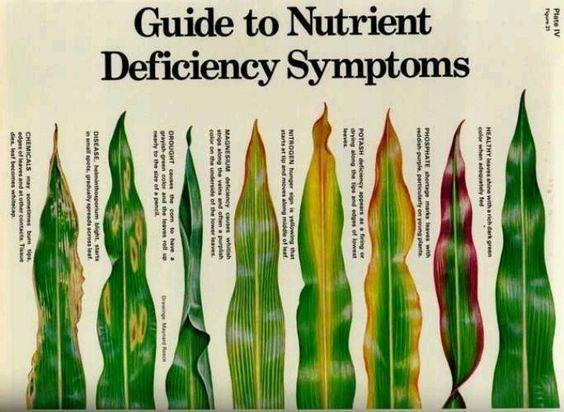 Reduces the nutrient Deficiencies