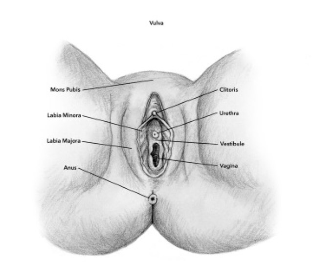 Though The Clitoris May Only Be Three To Five Inches Long And Tucked Securely Behind Your Clitoral Hood Along The Vaginal Canal It Is Undoubtedly An