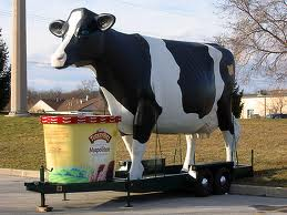 Cows Ice Cream