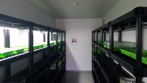 Portable greenhouse in the shipping container. Photo provided by Boks Farms.