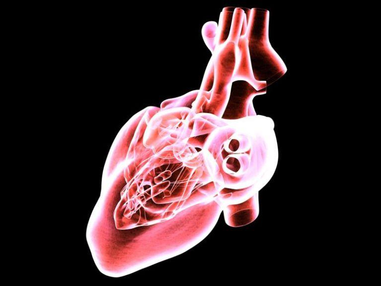 Гриб львиная грива от болезней сердца